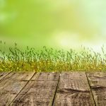 Simple Ways To Boost Up The Backyard Run Of Your Dogs With Artificial Grass